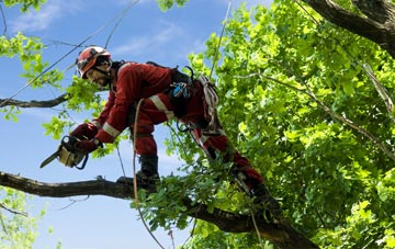 find trusted rated Bristol tree surgeons