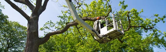 Bristol tree surgery services