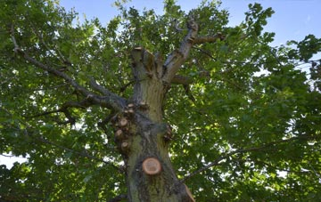 what is Bristol tree surgery?